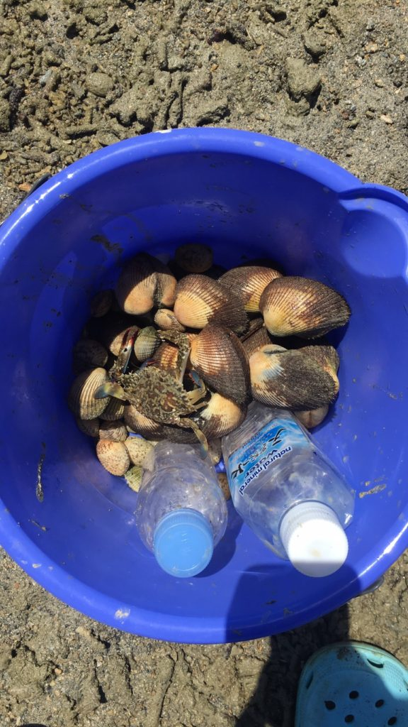 浜辺で採ったアサリ