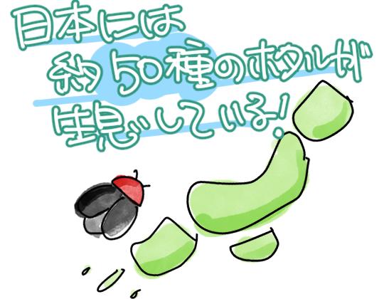 日本に蛍が50種