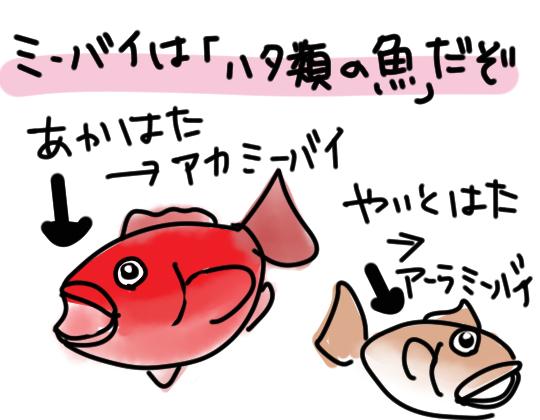 ミーバイはハタ類の魚